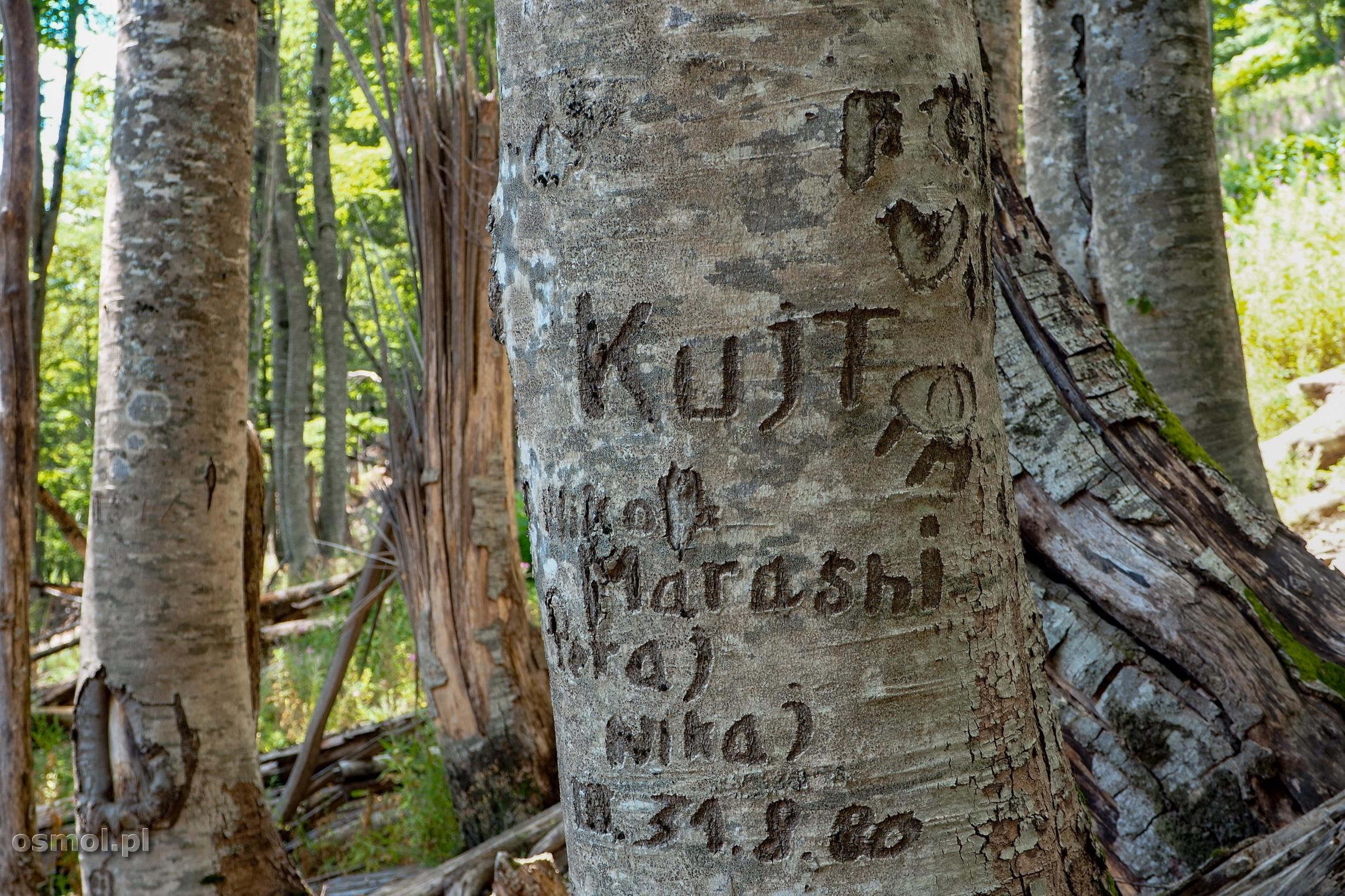 Drzewa na szlaku do Theth