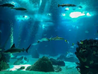 Ryby w oceanarium w Lizbonie