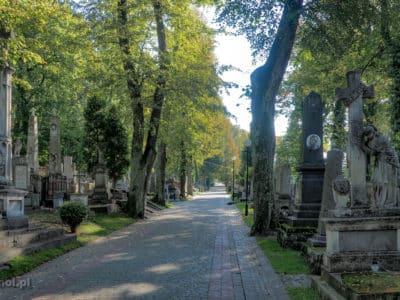 Alejka na Cmentarzu Łyczakowskim we Lwowie. Jesienią cmentarz wygląda szczególnie zjawiskowo.