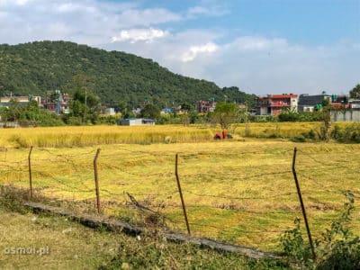 Pole ryżowe w Pokharze. Tak w mieście też można uprawiać ryż