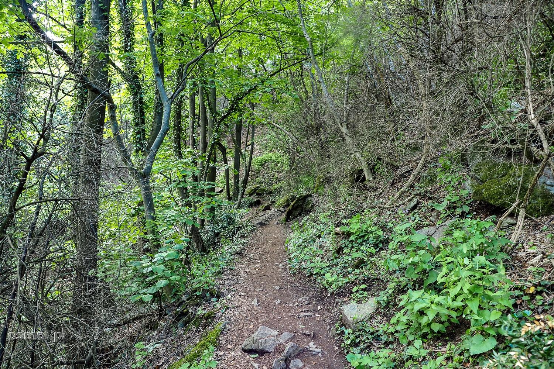 Szlak w Kanionie Matka. Cześć szlaku wiedzie tuż obok wody, ale są odcinki, które chowają drogę wśród drzew.