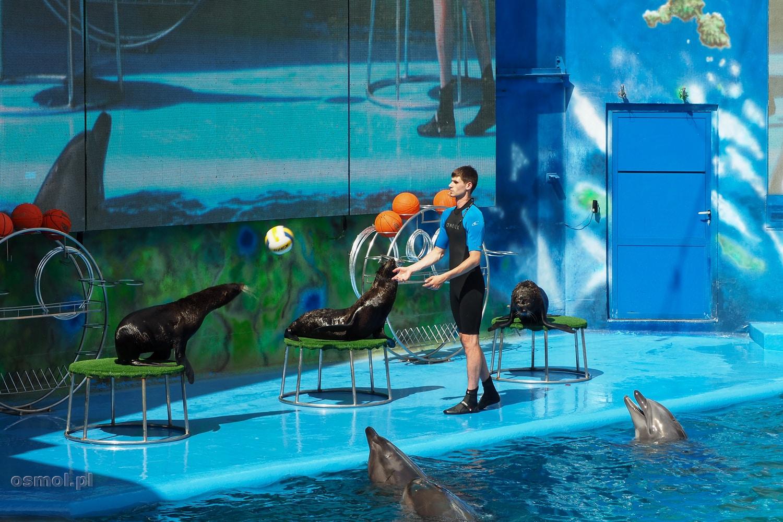 Delfiny i foki w oceanarium w Odessie