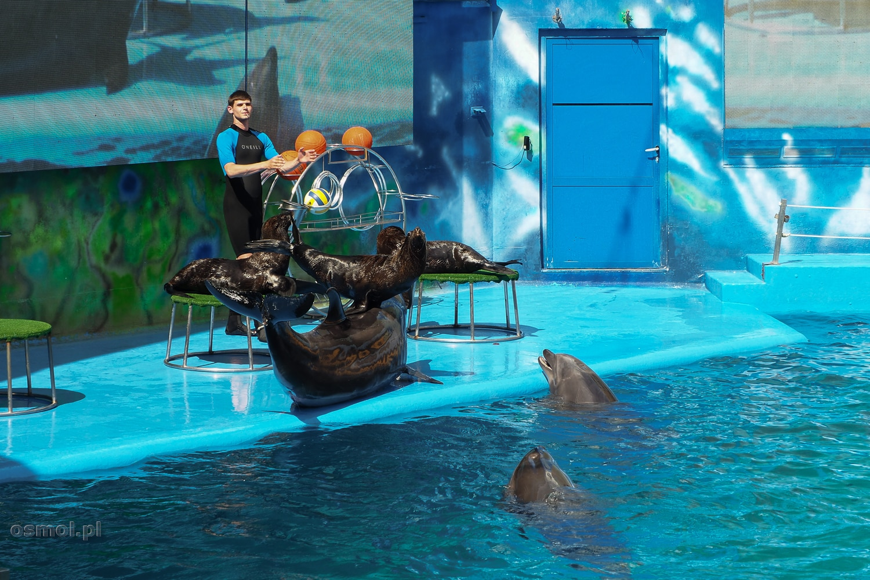 Delfinarium w Odessie