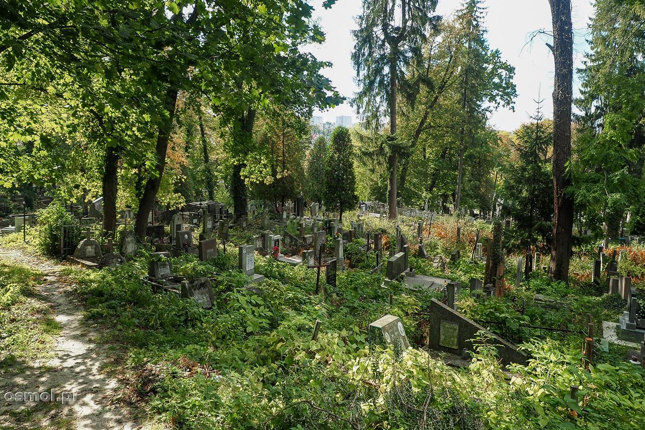 Zarośnięta część Cmentarza Łyczakowskiego we Lwowie