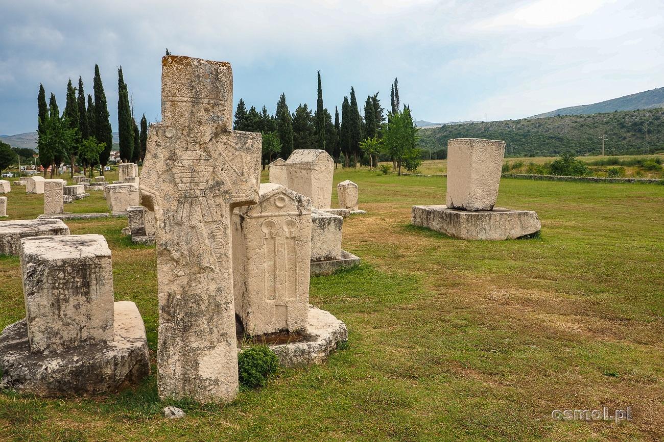 Cmentarz w Radimlji obok Stolac w Bośni