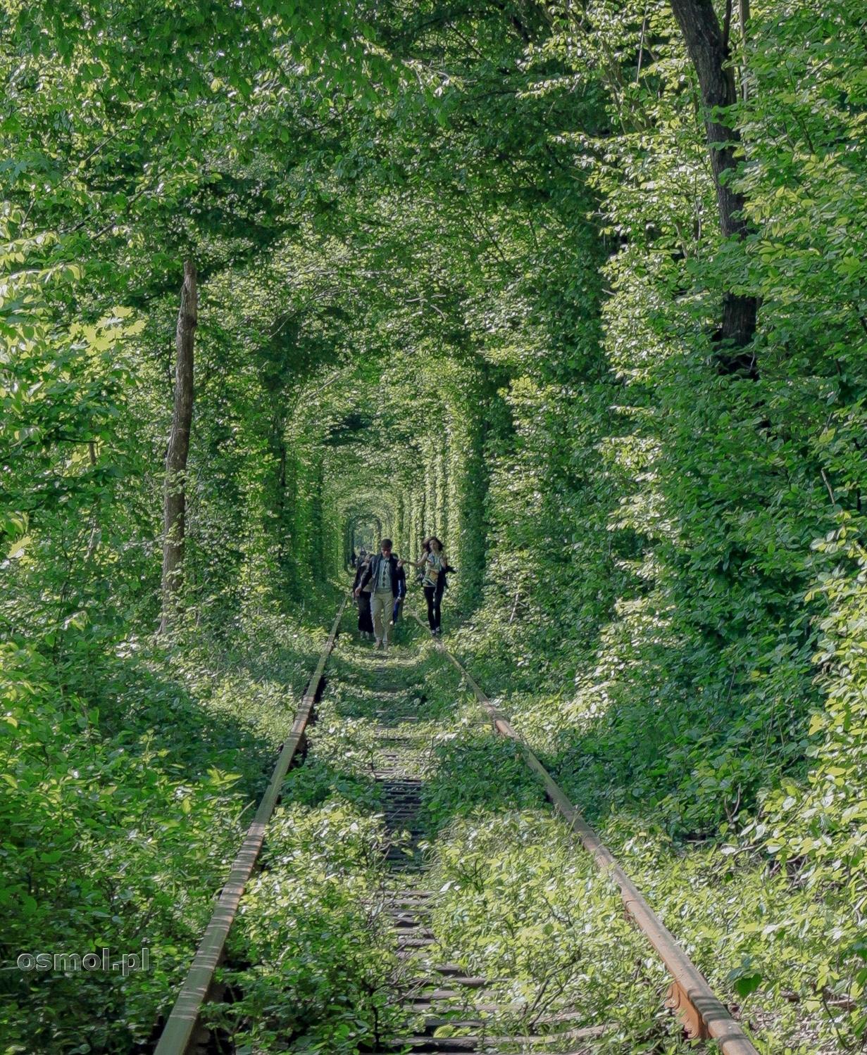 Drzewa zamykające się nad Tunelem Miłości w Klewaniu