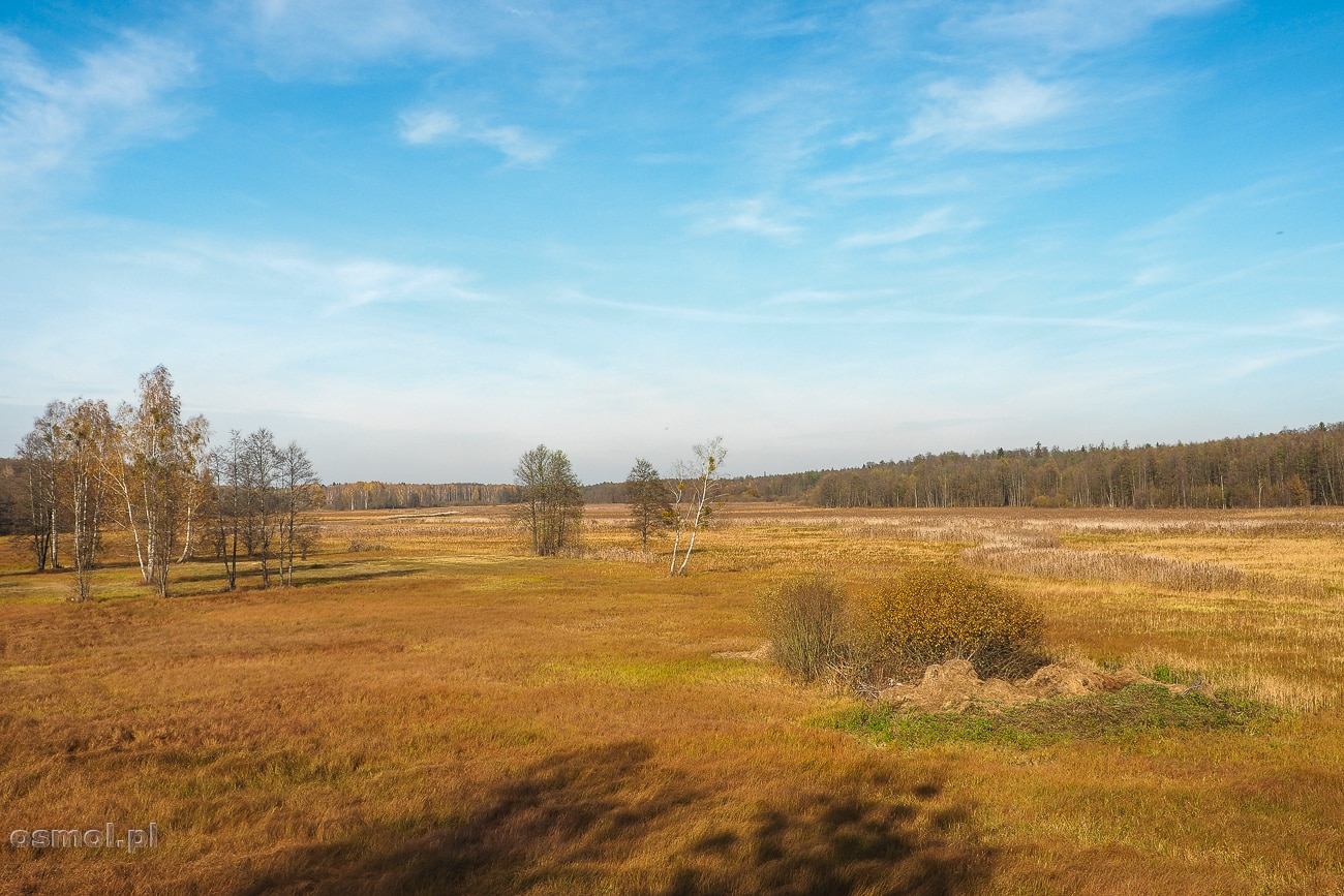 Panorama łąk na terenie Białowieży - Dolina Narewki