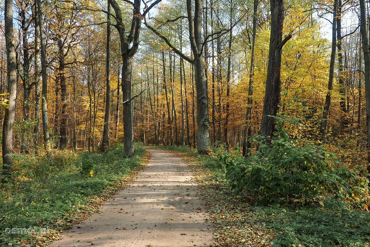 Puszcza Białowieska - las można oglądać pieszo lub przemieszczać się po niej rowerem. Ścieżki rowerowe są wygodne a dzięki osłonięciu przed wiatrem jeździ się po nich z łatwością.