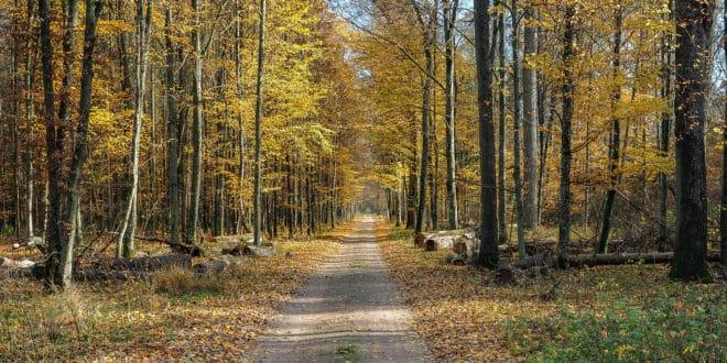 Puszcza Białowieska - najstarszy zachowany pierwotny las w Europie. Cud przyrody, jedno z najpiękniejszych miejsc w Polsce