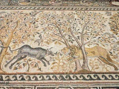 Walka byka z lwem na mozaice odsłoniętej w Heraklei.