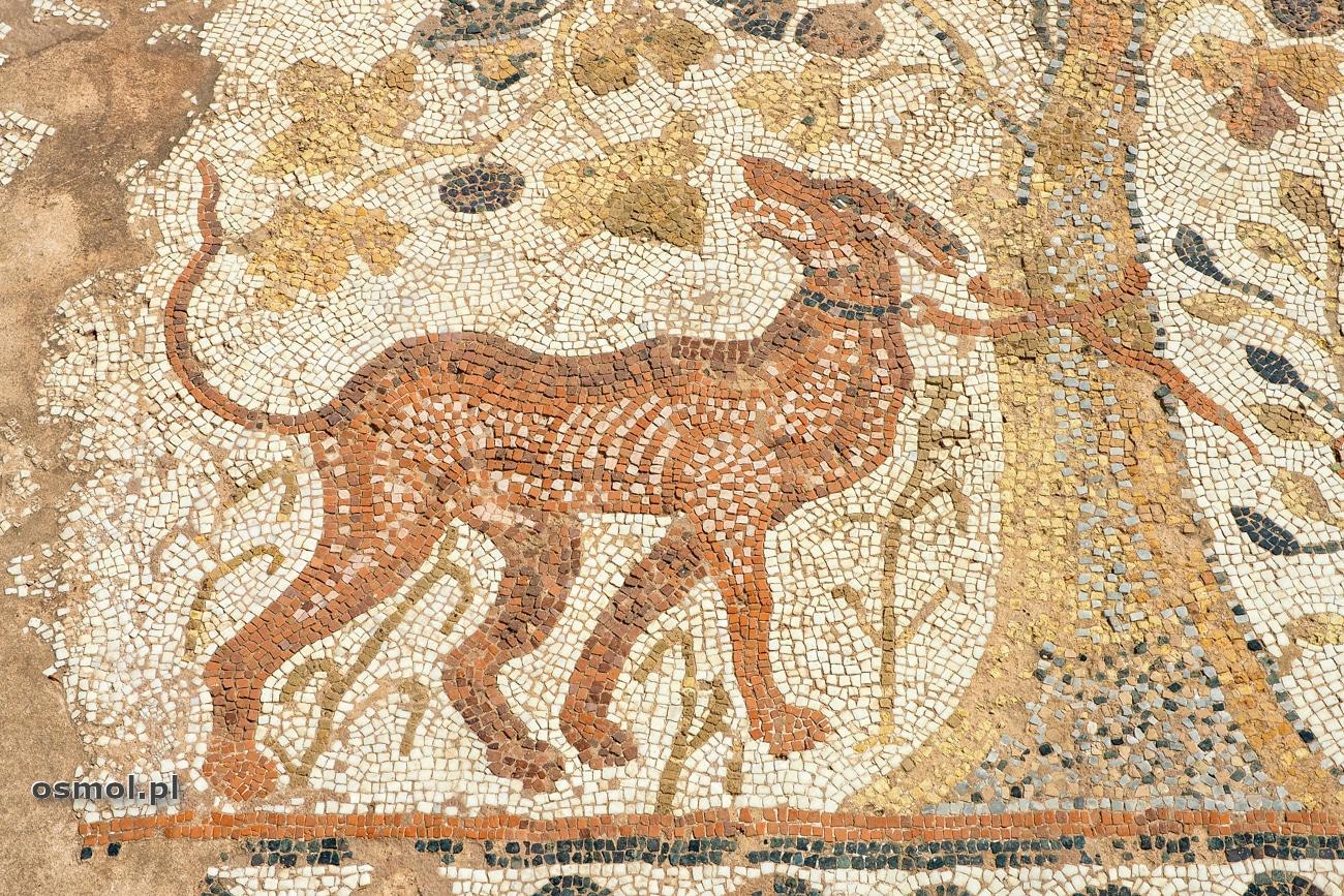 Pies przywiązany do drzewa na mozaice w antycznej Heraklei