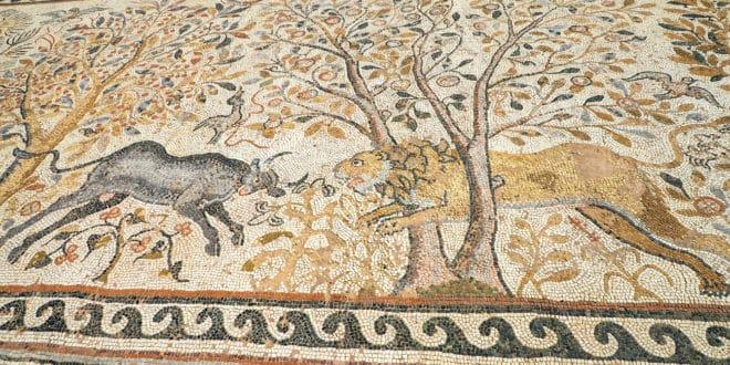 Walka byka z lwem na mozaice odsłoniętej w Heraklei