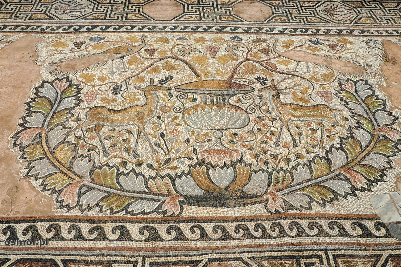 Mozaika ze świętym graalem oraz parą jeleni - najpiękniejsza część mozaiki w Heraklei