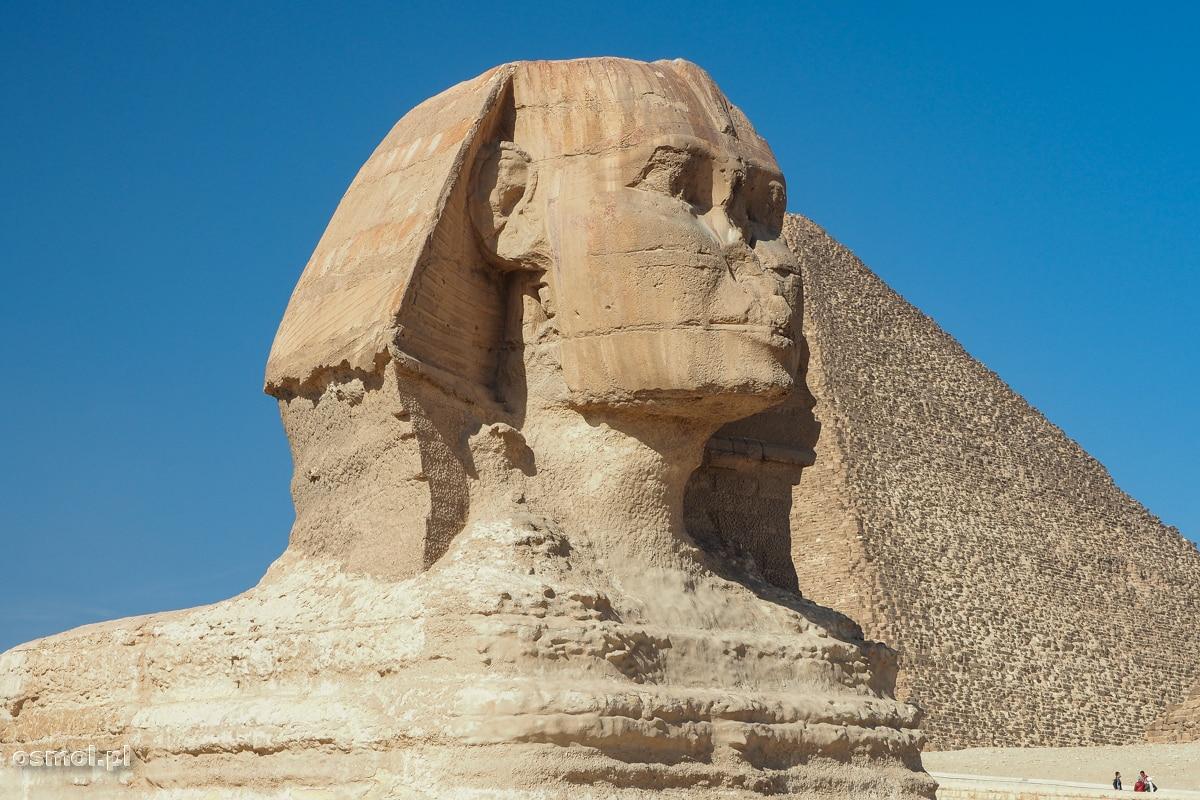 Wielki Sfinks w kompleksie piramid. Do dziś nie wiadomo, co stało się z nosem tego słynnego pomnika.