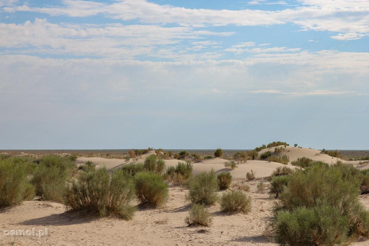 Porośnięte krzakami dno dawnego Jeziora Aralskiego
