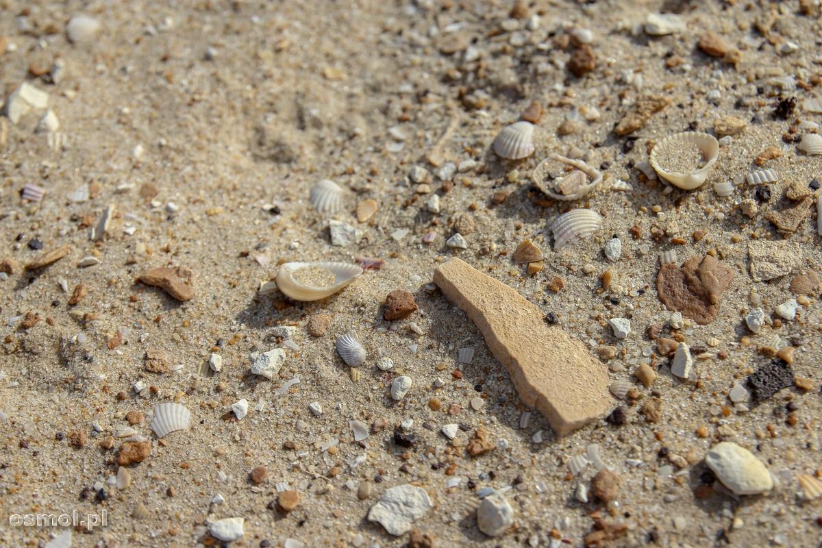 Muszelki na dnie wyschniętego Morza Aralskiego