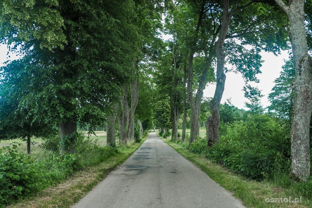 Drzewa gdzieś przy drogach Warmii