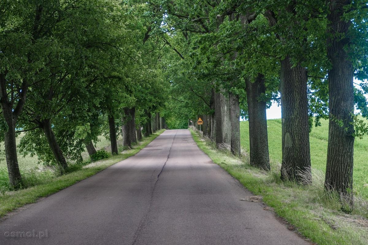 Drzewa przy drogach Warmii