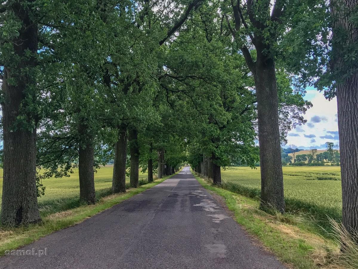 Droga w miejscowości Troksy blisko Reszla