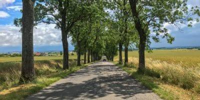 Aleja drzew przy drodze na Warmii. Droga z Bisztynka do Reszla w miejscowości Sątopy