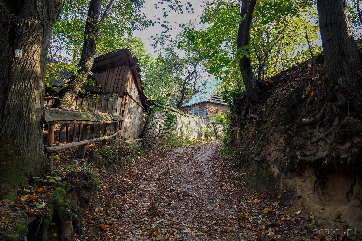 Wąwóz gdzieś w drodze z Wąwozu Małachowskiego na Albrechtówkę