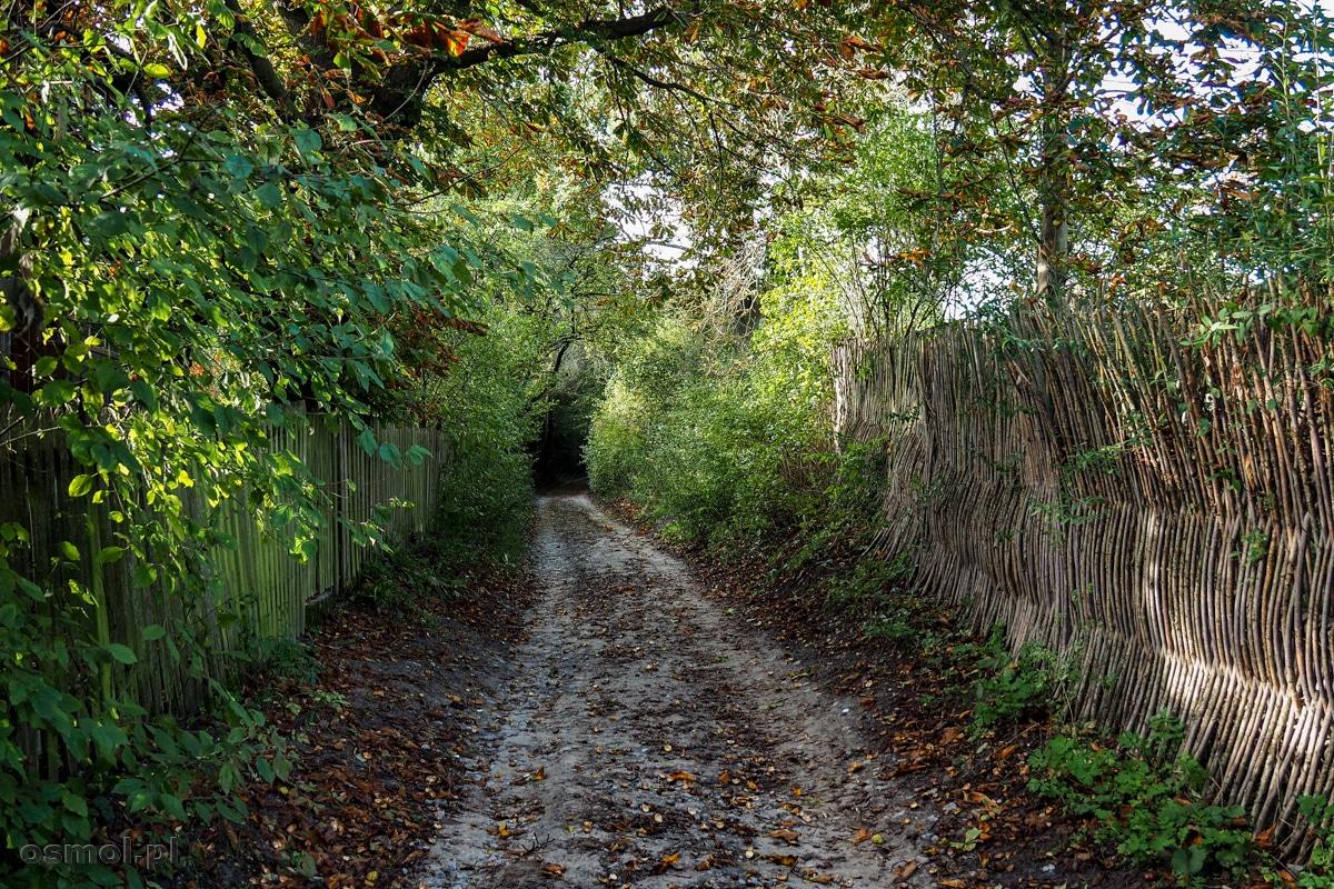 Droga między płotami w Mięćmierzu
