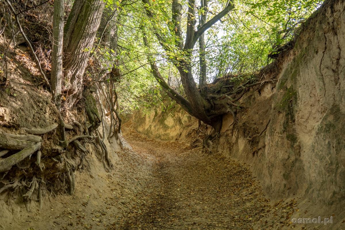 Ściany Korzeniowego dołu sięgają kilku metrów wysokości