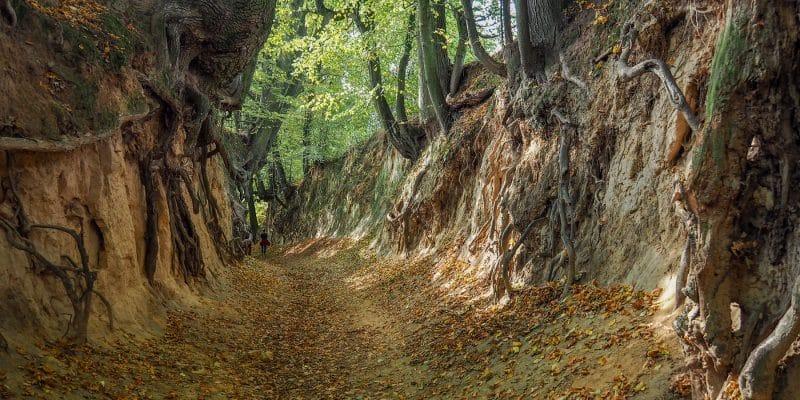 Wąwóz Korzeniowy Dół w Kazimierzu Dolnym
