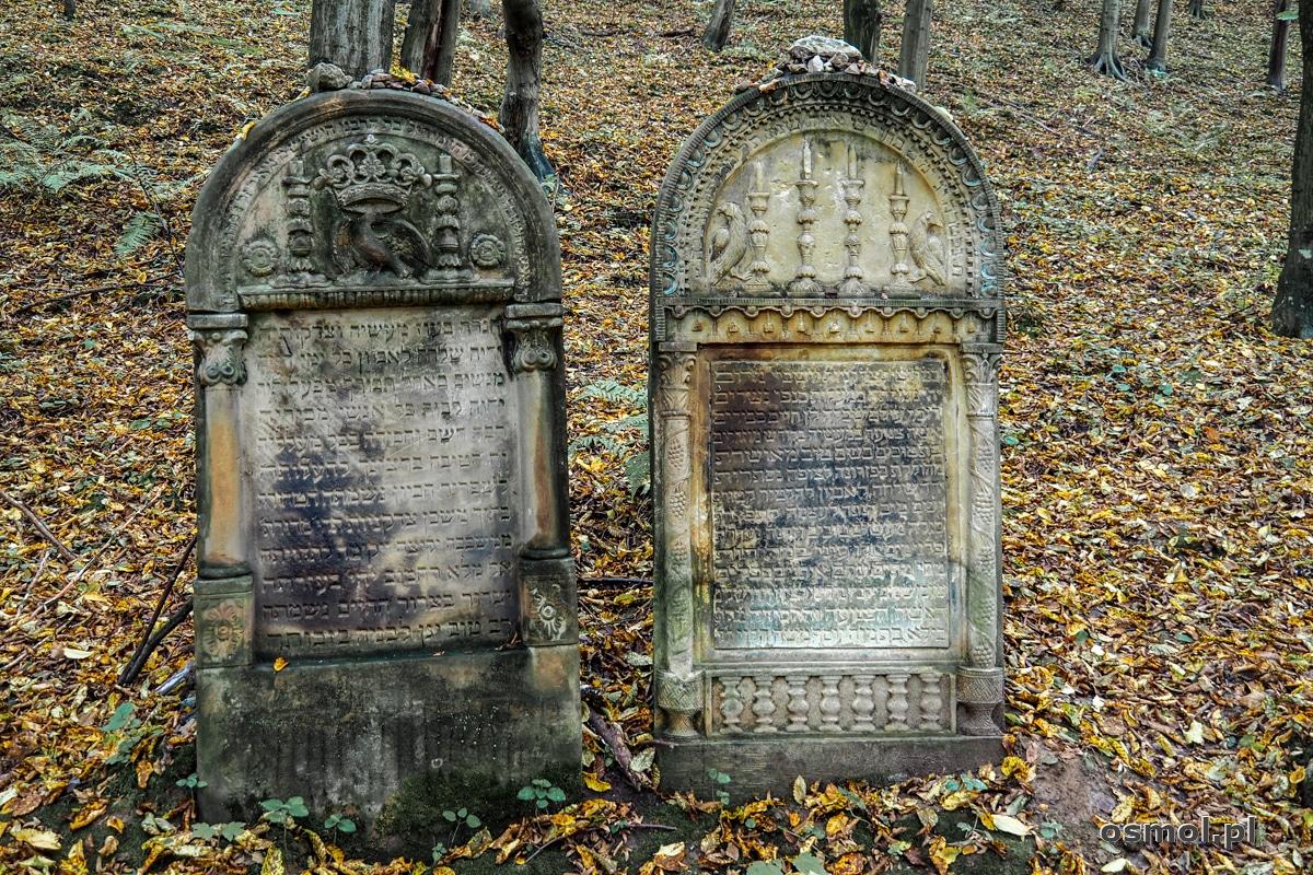 Ocalałe macewy na cmentarzu żydowskim w Kazimierzu Dolnym