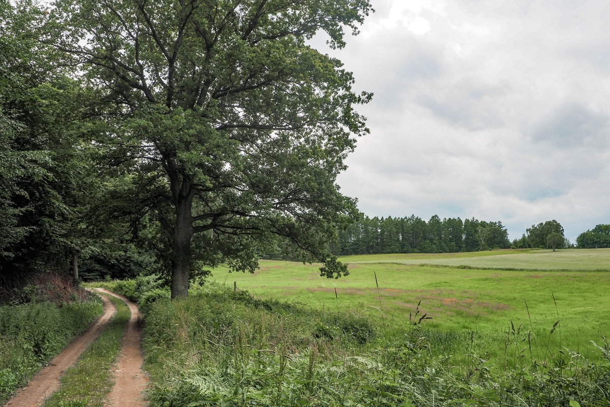 Leśna droga na Warmii. Gdzieś w okolicach Mikołajewa