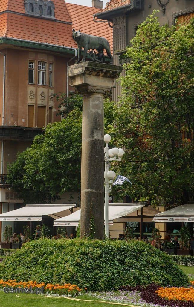 Kolumna z Wilczycą Kapitolińską podarowana Timisoarze przez Rzym