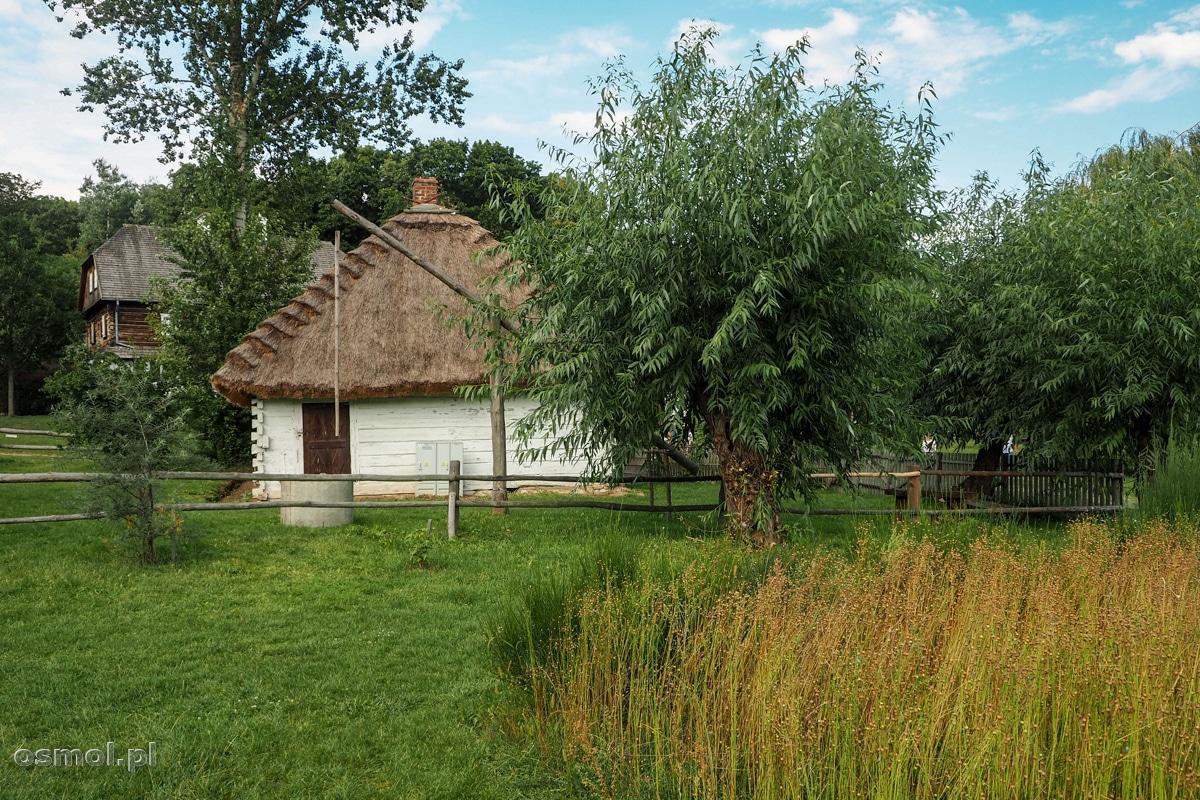 Mała plantacja lnu w skansenie w Lublinie