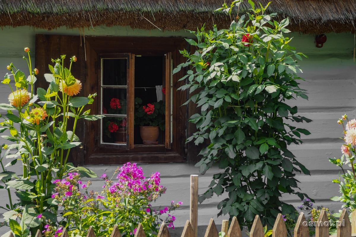 Kwiaty w małym przydomowym ogródku