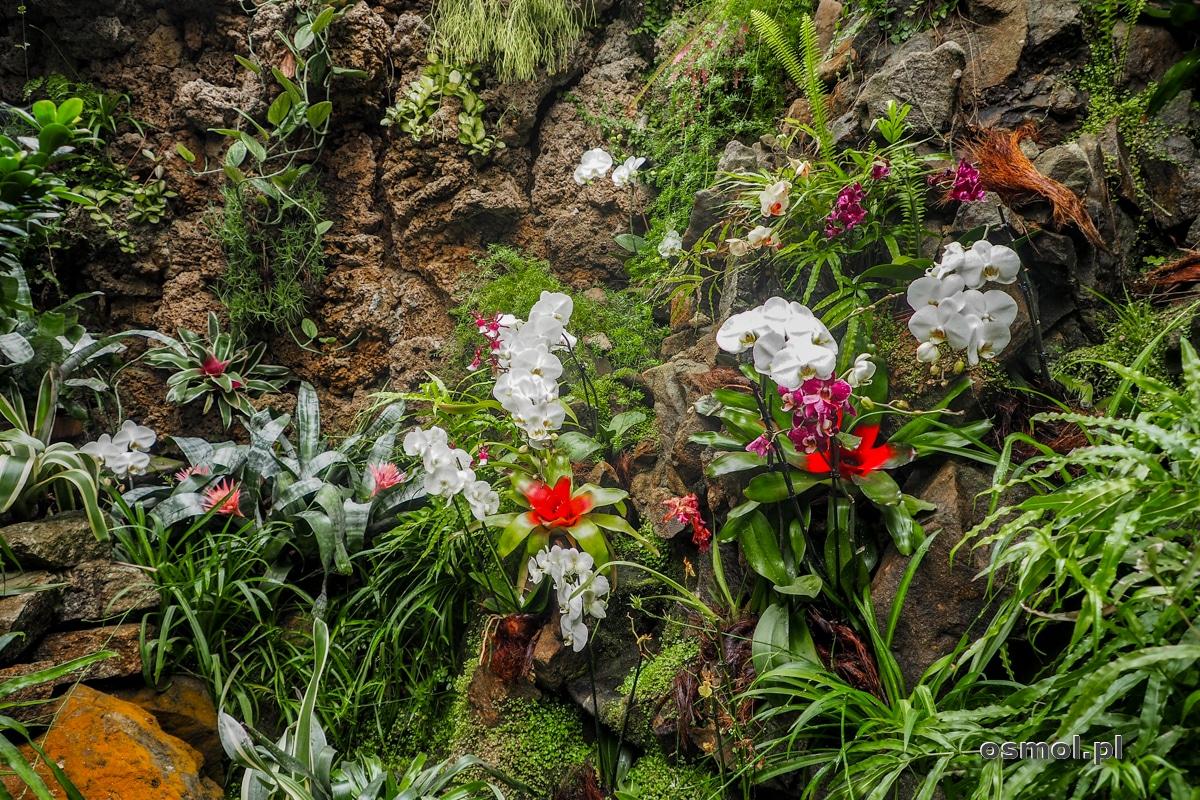 Rośliny w palmiarni zamku Książ