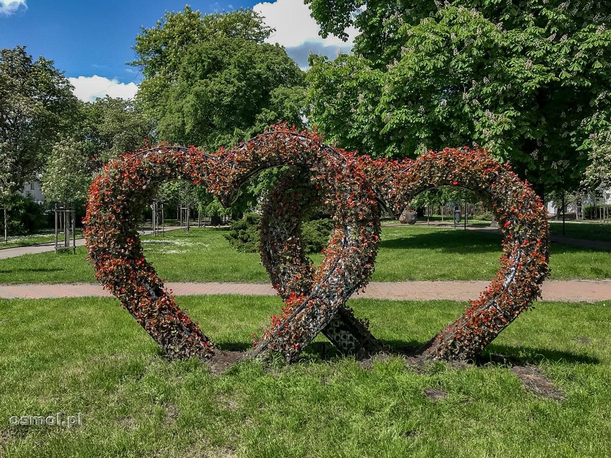 Serca ułożone z roślin na jednym z placów w Chełmnie
