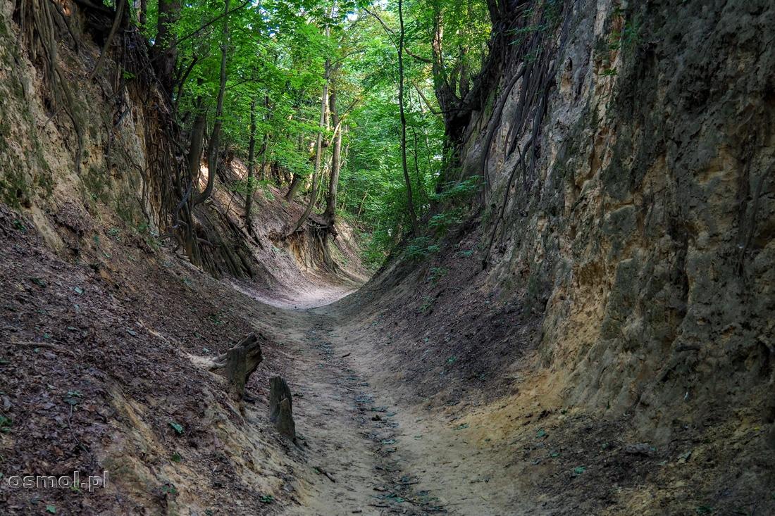 Ścieżka biegnąca Wąwozem Królowej Jadwigi